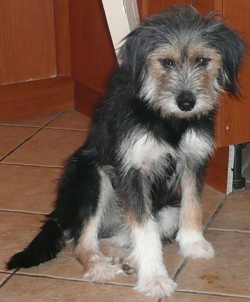Πάτι – Patty(ADOPTED)